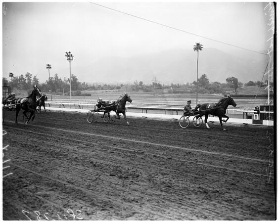 Horses -- race -- harness race at Santa Anita, 1958