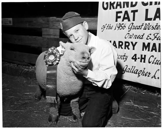 Great Western livestock show, 1956