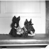 Scotties, 1957