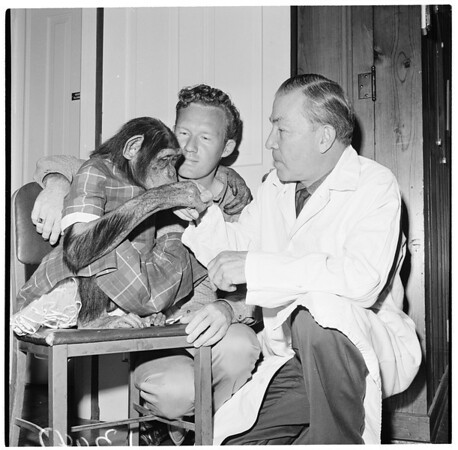 New monkey at Griffith Park Zoo, 1961