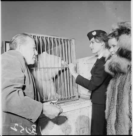 Polar Bear to Griffith Park Zoo, 1961