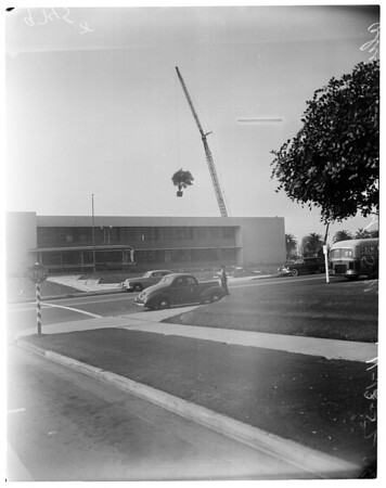 Olive trees over roof (Rand Corporation Santa Monica), 1952
