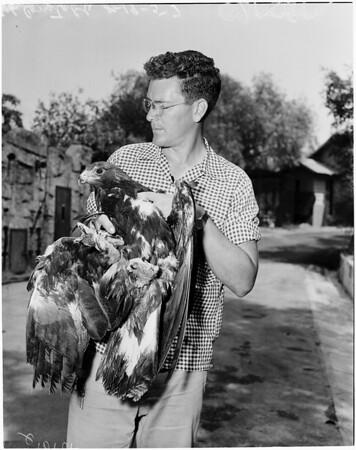 Griffith Park Zoo Confabulation, 1957