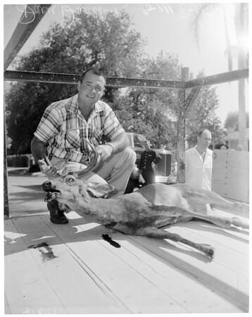 Deer Slayer, 1960