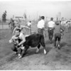 Great Western livestock show, 1956