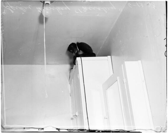 Monkey loose in home in bathroom at 6608 1/2 El Selinda in Bell Gardens, 1958