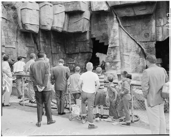 Griffith Park Zoo dead bear, 1961