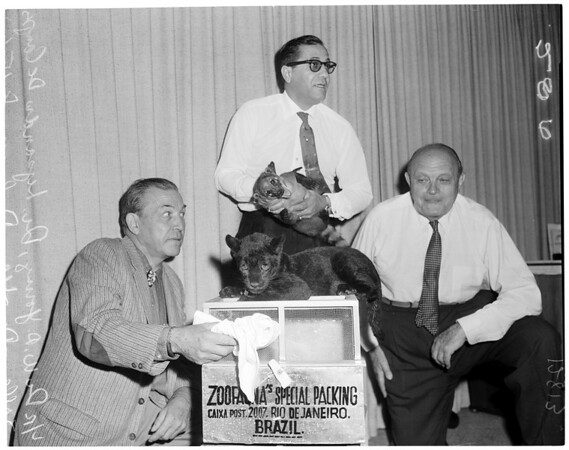 Brazil animals to Los Angeles Zoo, 1960
