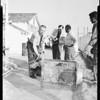 Kinkajou found in home in Santa Ana, 1960