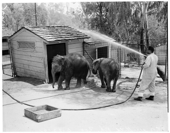Fire safety at Griffith Park Zoo, 1961