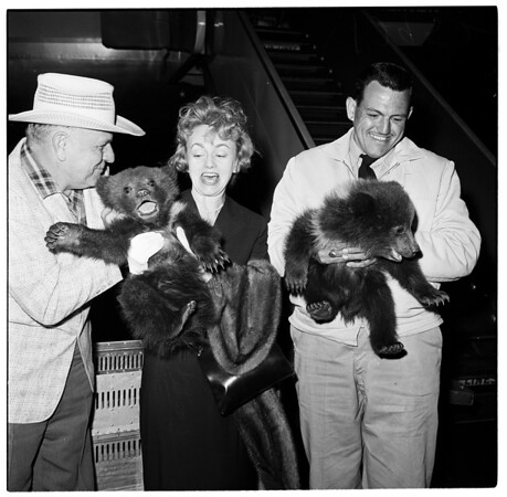 Three bear cubs presented to Griffith Park Zoo, 1961