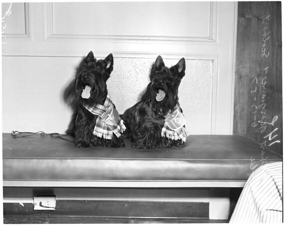 Scotties, 1957