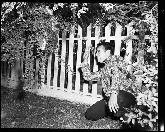 Bee swarm, 1952