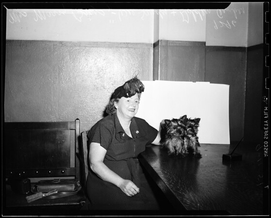 Imported Yorkshire Terriers, 1951