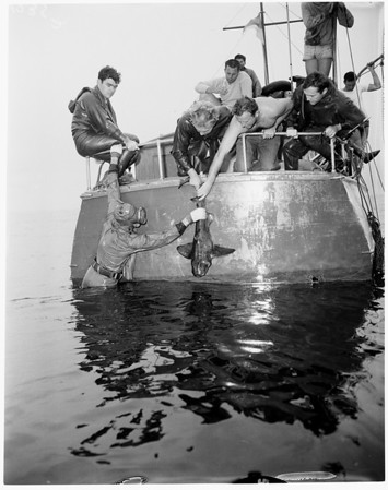 Aqua Explorers of Ventura County (skin diving), 1954
