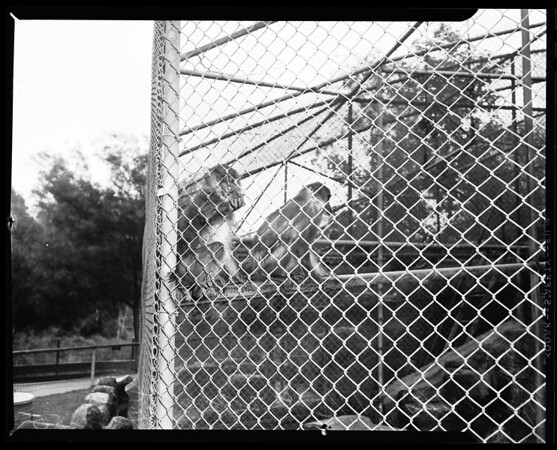 Zoo at Griffith Park, 1955