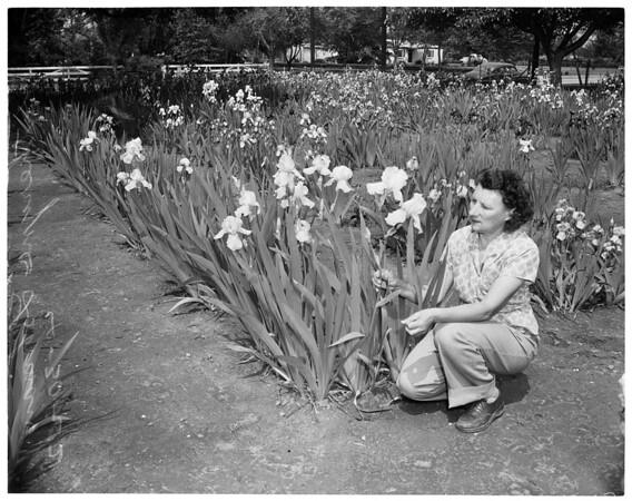 Iris growing champion, 1952