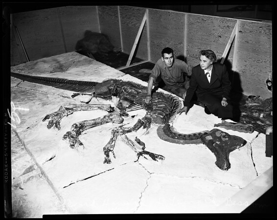 Dinosaur being mounted at County Museum, 1954
