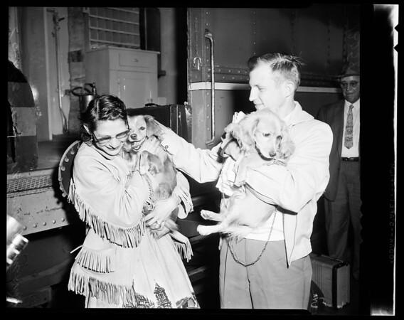 """""""Sugar Ray"""" the lost dog, 1957"""