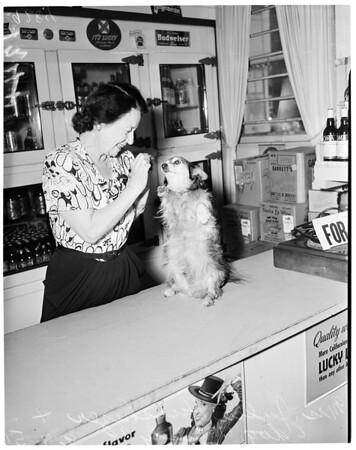 """""""Sandy"""" the brave dog, 1951"""
