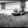 Four half grown skunks, 1956