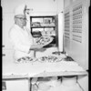 Chef aboard S.S. President Wilson, 1955