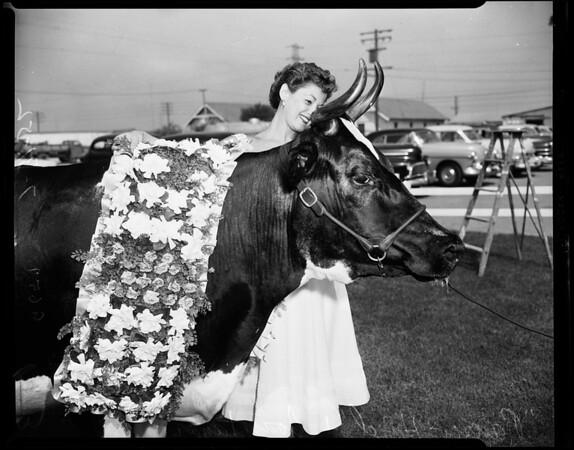 Dairy champion milk producer, 1952