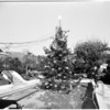 Christmas tree in swimming pool, 1954