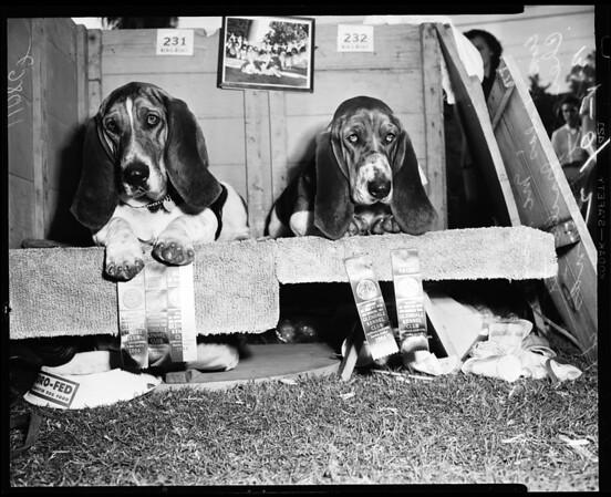 Glendale dog show, 1954