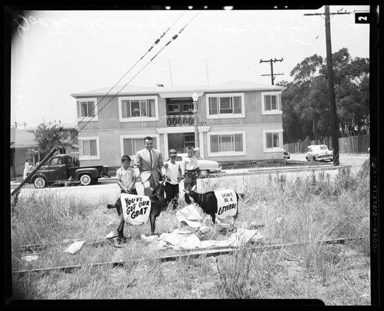 Goats to beautify city of Culver City, 1955