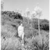 Yucca plants, 1952