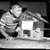 Pet show (Examiner), 1951