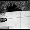 20 foot hole at 6131 Afton, 1955