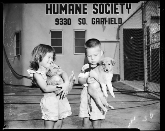 Society for the Prevention of Cruelty to Animals opening shelter at 9330 Garfield Avenue, South Gate, 1952