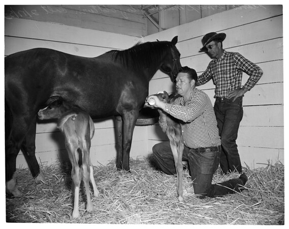 Twin horses, Northridge Farms, 1953