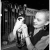 Long Beach Cat Fanciers' 8th Annual Cat Show, Long Beach Auditorium, 1953