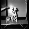 Dog Show at Pan Pacific,  1955