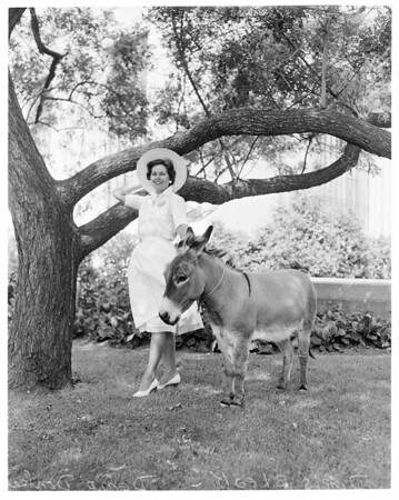 Demo Donkey, 1960