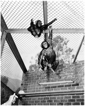 Griffith Park Zoo, 1958
