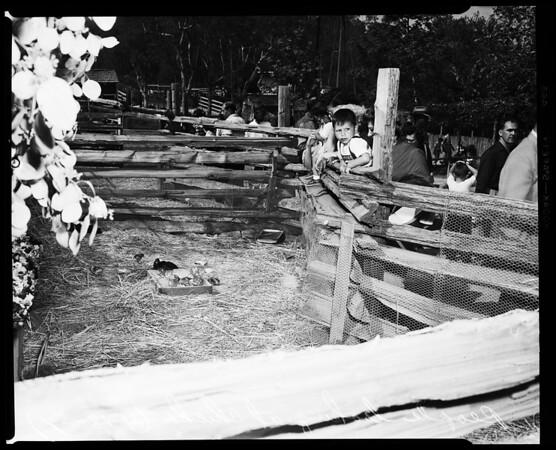 Griffith Park barnyard, 1954