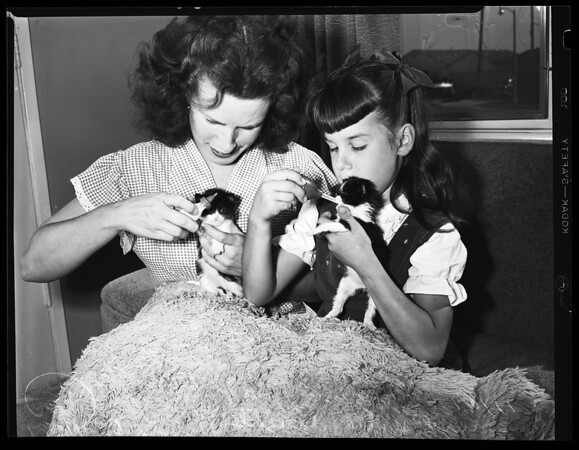 Cats: bottle-fed kittens, 1954
