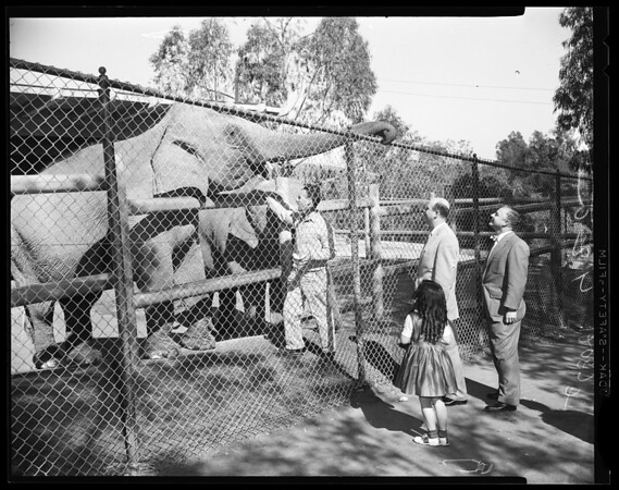 Councilmen inspect Griffith Park Zoo, 1957