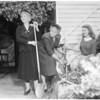 Wisteria Fiesta at Sierra Madre (planting new Wisteria vine), 1954