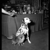 Dog Show at Pan Pacific,  1955
