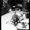 Model insects (model of golden wasp), 1954