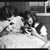 Cats: bottle-fed kittens, 1954