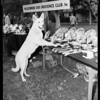 Dog Trials (obedience trial at Hollywood Dog Obedience Club, Incorporated), 1954