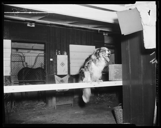 Dog story -- Hollywood Park, 1955