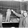 Polar Bear presented to City Zoo (Cub), 1957