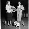 Dog show, 1953